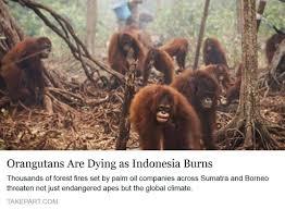 palmöl ist nicht kokosöl nardias gorillas